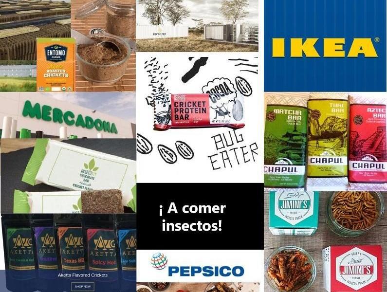 Empresas alimentarias e invresores que apuestan por los insectos