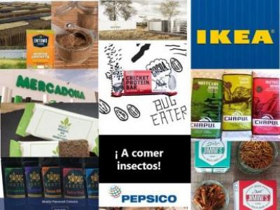 Las empresas que apuestan por los insectos como parte de la dieta